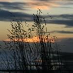 IMG_5260_grass_sunrise_sml